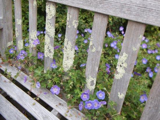 Boylston, MA: Peeking through the bench