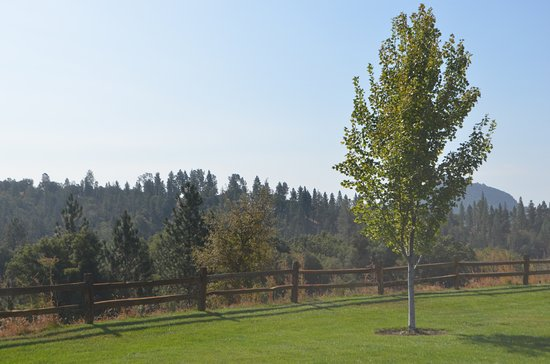 Jackson Rancheria RV Park : Another view from the RV park.