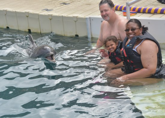 Dolphin Quest: Marley