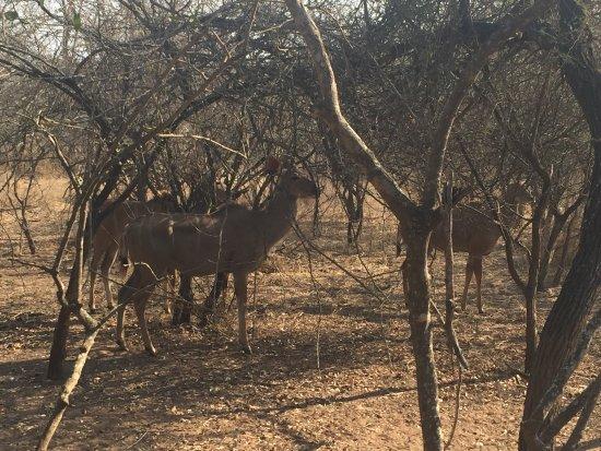 Marloth Park, Sudafrica: photo0.jpg