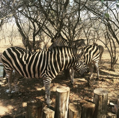 Marloth Park, Sudáfrica: photo1.jpg