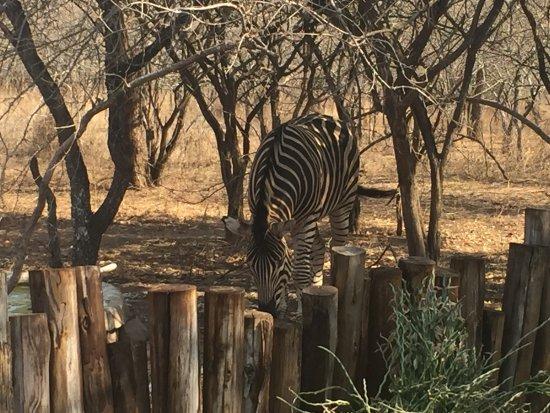 Marloth Park, Sudáfrica: photo2.jpg