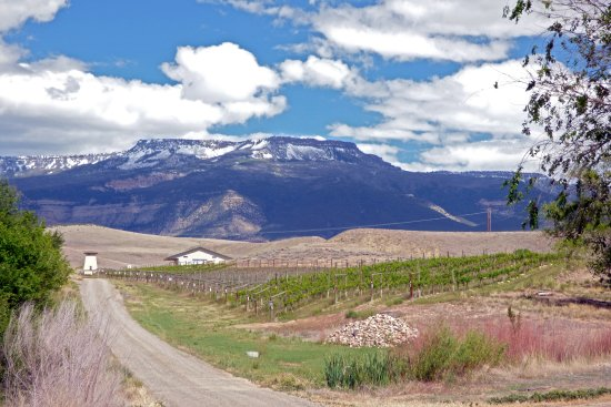 Palisade, CO: Local vineyard with Grand Mesa behind it.