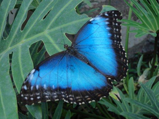 Kerzers, Sveits: papillon1