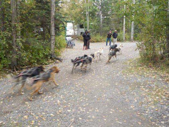 Wasilla, Αλάσκα: Sled Dog Race