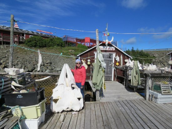 Twillingate, Canadá: A part of the second whale squeleton You will see that if you visiting next year!