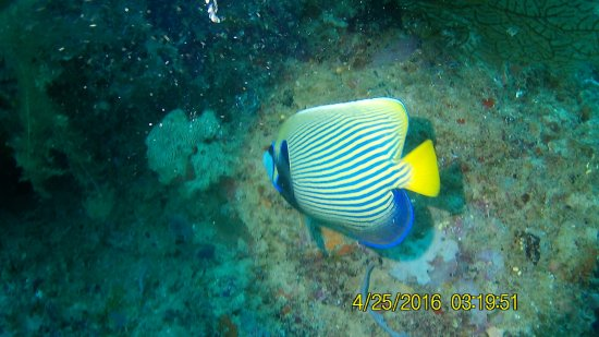 Tropical Diving Image