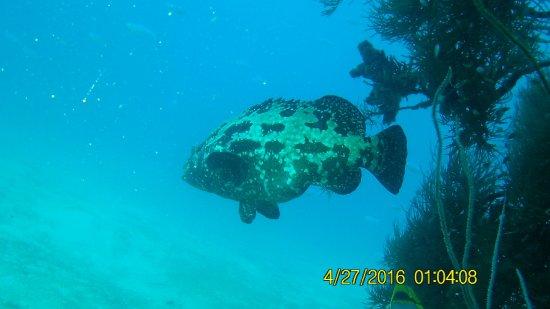 Foto de Tropical Diving