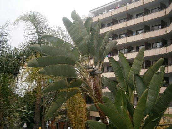 El Tope Hotel Puerto De La Cruz Reviews