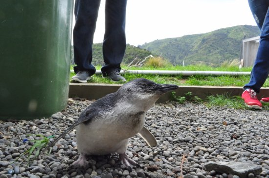 EcoWorld Aquarium and Wildlife Rehabilitation Centre: The behind the scenes tour introduced us to this little guy