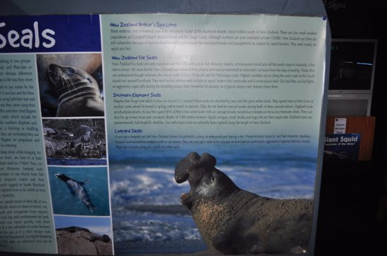 EcoWorld Picton Aquarium: Educational materials inside enriched our trip - all over New Zealand