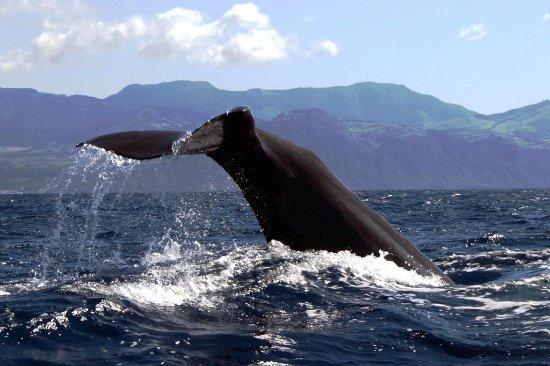 Açores Ver Baleias Terra Azul
