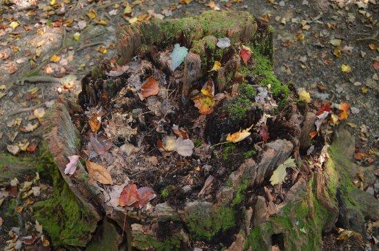 Panama Rocks Scenic Park: dead tree stump with leaves