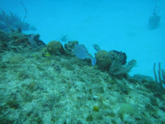 San Andres Divers: Under the sea