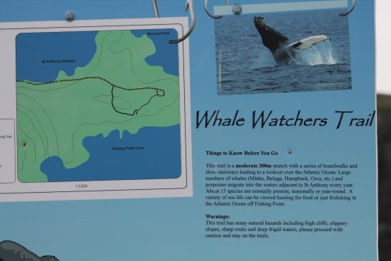 Whale Watchers Trail