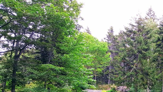 Coastal Maine Botanical Gardens: Waterfall