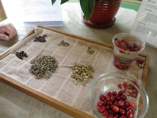 Mountain Thunder Coffee Plantation: beans