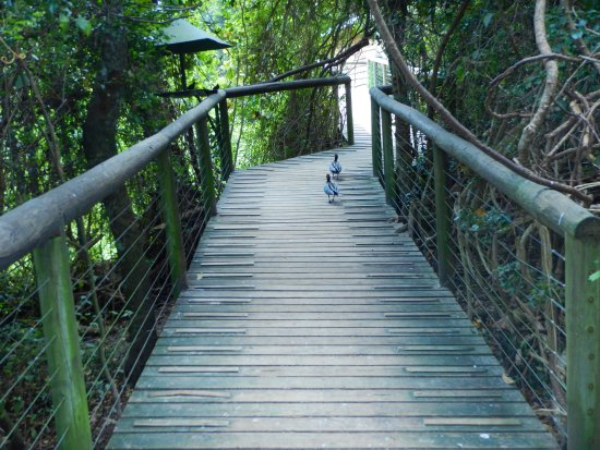 Birds of Eden: Nice pathways...never know what you'll see around each corner