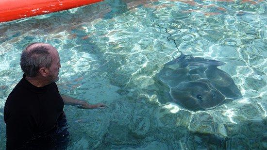 Maohi Nui : Touching stingrays