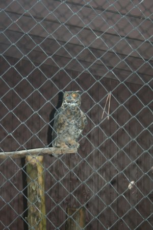 Huntersville, NC: one of an assortment of owls to see