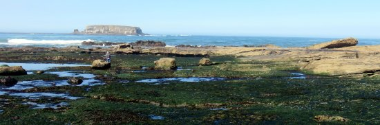 Otter Rock, OR: Tide pools and Gull Rock during low tide right below Otter Crest