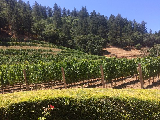 Pine Ridge Winery: Pine Ridge vineyards