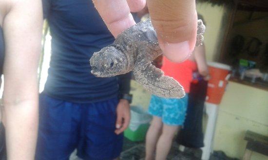 Bahia Divers : Proteçãp de tartarugas