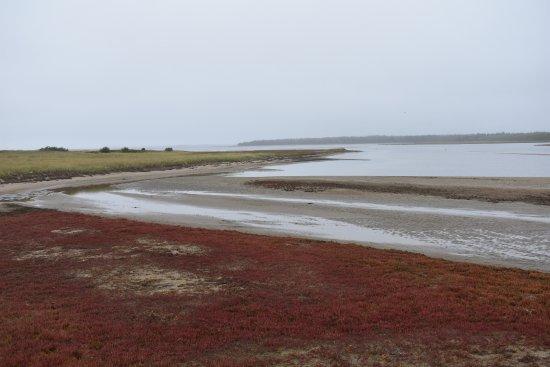 Saint-Louis-de-Kent, Canada: Salt Marshes