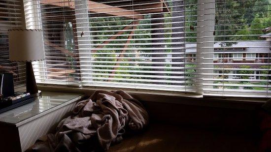 Union, WA: Window seat in room.