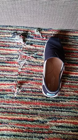 Union, WA: Size 7 1/2 Tom for reference of large rip in carpet.