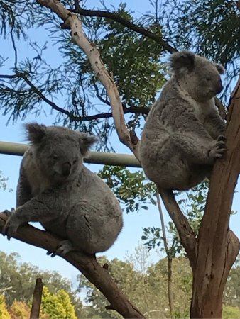 Featherdale Wildlife Park: photo7.jpg