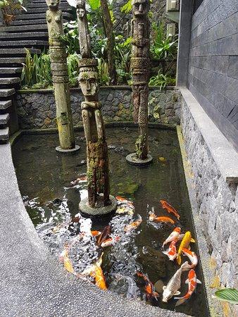 Hotel grounds picture of jungle fish ubud tripadvisor for Koi fish pond sydney