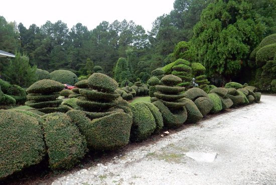 Bishopville, SC: at Pearl Fryar Topiary