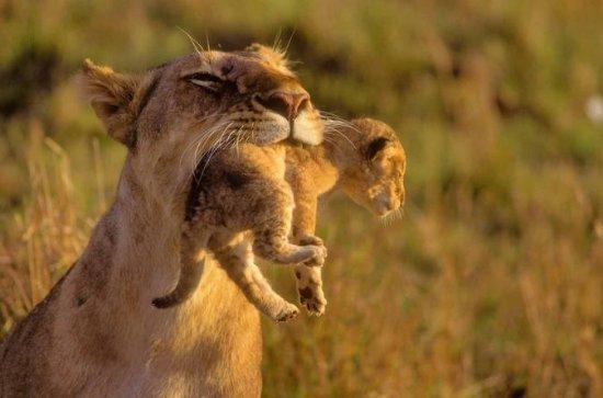 5Days Masai Mara Budget Tented...