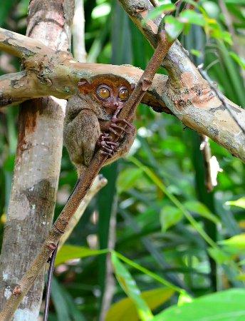 Lapu Lapu, Philippines: 1504017615355_large.jpg