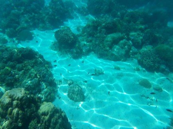 Balicasag Island Tour: 1504053272438_large.jpg