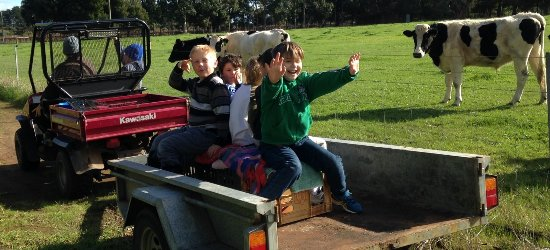 Wilyabrup, Austrália: Trailer rides to the creek for tadpoling