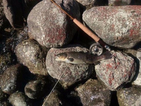 Riserva di Pesca Turistica del Torrente Forzo