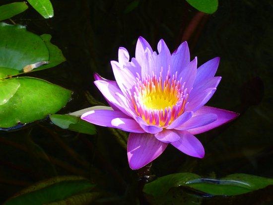 Generargues, Fransa: Fleurs de la bambouseraie