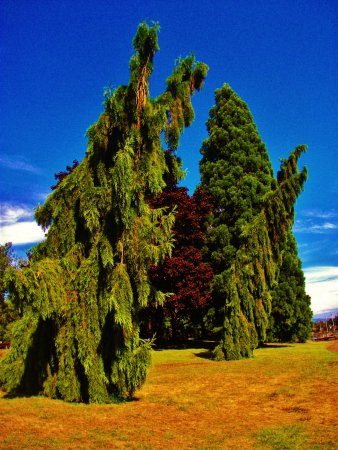 Fairview, OR: interesting trees along the lake