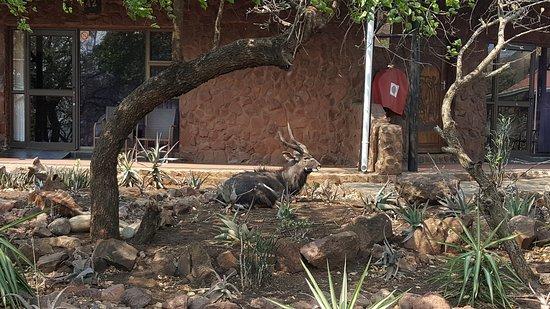 Hluhluwe, Südafrika: 20170916_044647_large.jpg