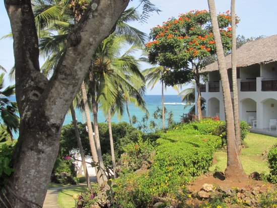 African Tulip Tree In Bloom Picture Of Leisure Lodge Beach And