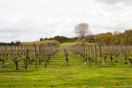 Villa Maria vineyards in Auckland