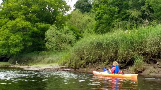 Blairgowrie, UK: Wildlife guided trips available - here in Perth City - River Tay kayaking