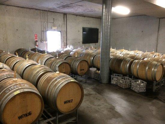 Yarra Valley, Australia: Wine barrels and more barrels.