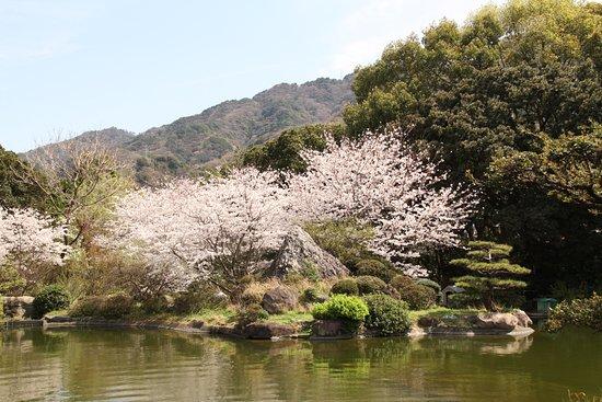 Kainan, Japan: 春  藤白山脈を借景として咲き誇る桜