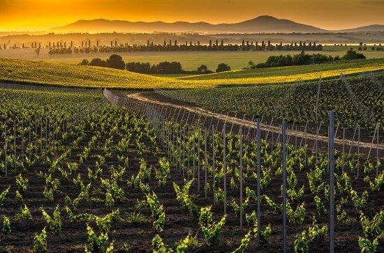 Tajna Vineyards and Winery