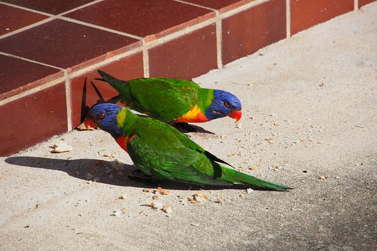 Arcadia, Australien: Colourful company outside our unit.