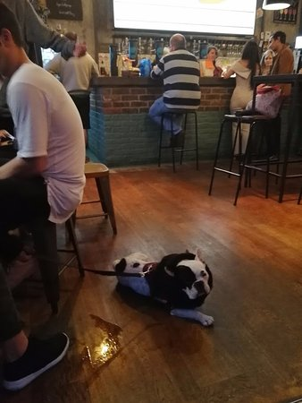 BrewDog Camden: les chiens sont les bienvenus chez brewdog