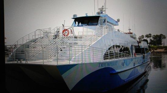 2SeeWhales Harbor Breeze Cruises : DSC_0375_large.jpg